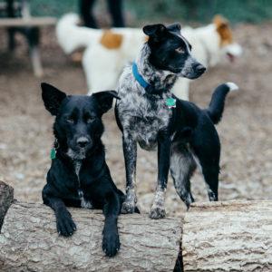 Dogs & Wildlife