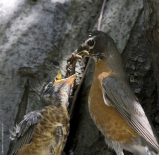 Fort Tryon Kids: Birds of a Feather at Cabrini Woods