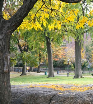 Fort Tryon Kids: Sketching & Painting Fall Foliage