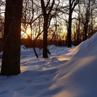 Highbridge Winter Walk with Expert Naturalist Mike Feller