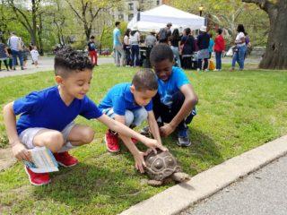 Urban Wildlife Festival